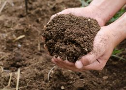 Plant organic compost fertilizer on farmer hand for planting