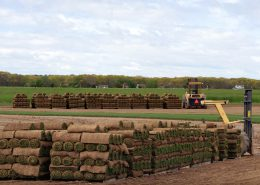 Rolled up sod on a sod farm waiting for pick up
